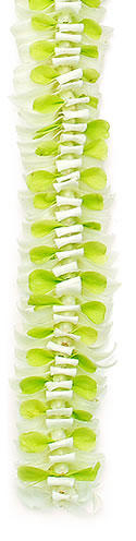 Specialty Orchid Leis, Butterfly Green White Orchid