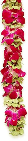 Double Orchid  Lei - Hawaiian Leis