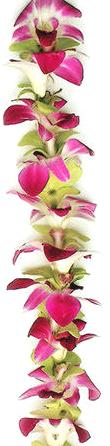 Hawaiian Leis, Orchid Mix Lei