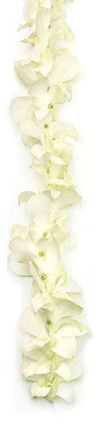 Hawaiian Leis, Orchid White Lei