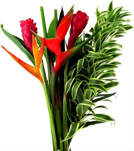 Tropical Flower Packs | Specialty Items