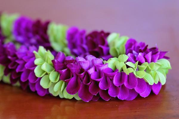 Fancy Robin Lei | Specialty Orchid Leis