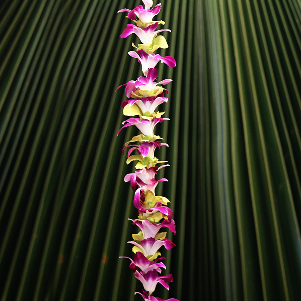 Single Purple and Green Orchid | Graduation