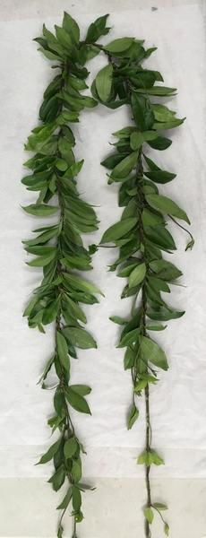 Hilo Maile | Wedding Leis For Men