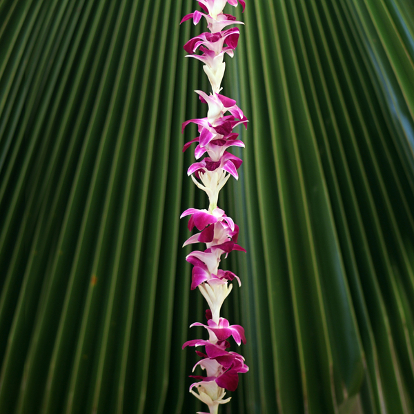 Hawaiian Leis, Orchid Tuberose Combination Lei