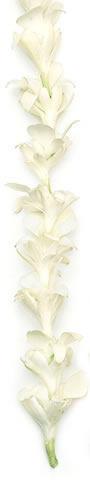 Hawaiian Leis, Tuberose White Orchid Lei