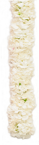 Double White Carnation | Graduation