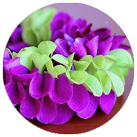 Image Specialty Orchid Leis