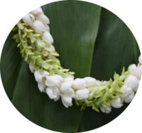 Image Cindy's Fragrant Leis