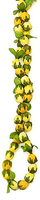 Image Everlasting Yellow Rosebud Lei