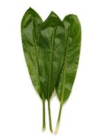 Image Green Ti Leaves