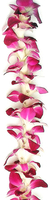 Image Purple Orchid Lei