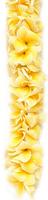 Image Double Yellow Plumeria